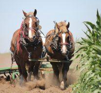 Historia rolnictwa inarzędzi rolników