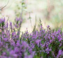 Kwaśna ziemia – jakie rośliny można wniej hodować?