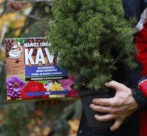 Pozytywne skutki regularnego nawożenia roślin doniczkowych