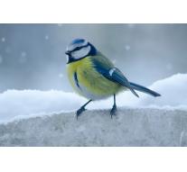 Dlaczego warto robić zdjęcia natury zimą?
